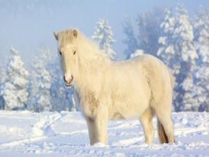 Caballo blanco quieto sobre la nieve