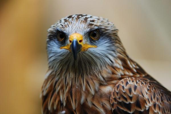 Mirada de un águila