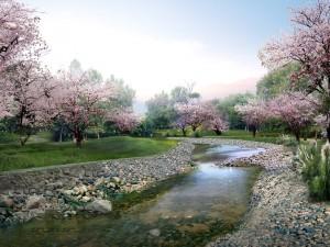 Árboles en flor en un parque