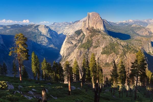 Pinos sobre grandes montañas