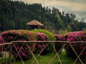 Arbustos con flores de color rosa
