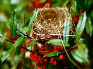 Nido de ave en las ramas de un arbusto con frutos rojos