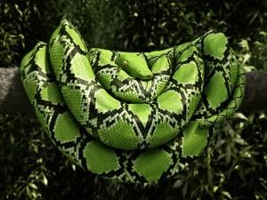 Serpiente verde en la rama de un árbol