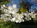 Flores de primavera en una rama