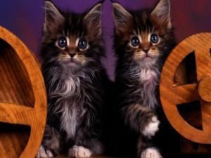 Dos gatitos sentados entre dos ruedas de madera