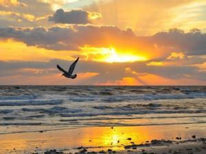 Gaviota volando sobre la orilla del mar al amanecer