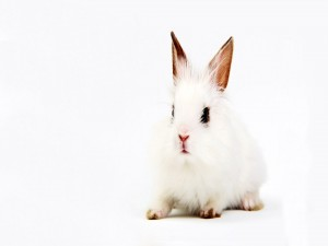 Un pequeño conejo blanco