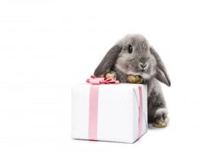 Conejo gris junto a una caja de regalo