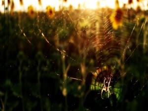 Sol iluminando una telaraña