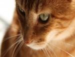 Un lindo gato con largos bigotes