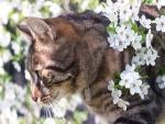 Gato entre las flores blancas de un árbol