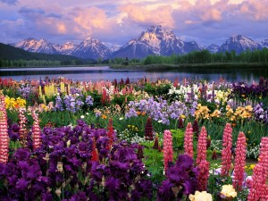 Coloridas flores junto a un lago