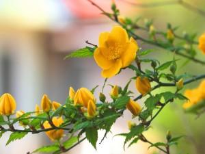 Flores amarillas en las ramas