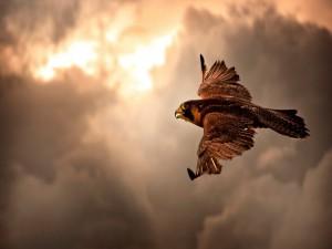 Águila volando bajo un cielo nuboso