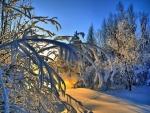Los rayos del sol de la mañana calentando un bosque cubierto de nieve