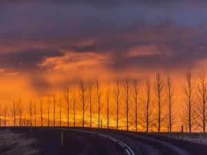 Árboles sin hojas junto a una carretera