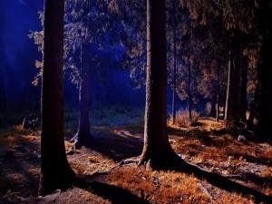 Luz iluminando un bosque en la noche