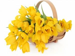 Tulipanes amarillos en una cesta