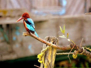 Pájaro de gran pico en el extremo de una rama