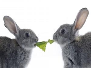Dos conejos comiendo una hoja verde