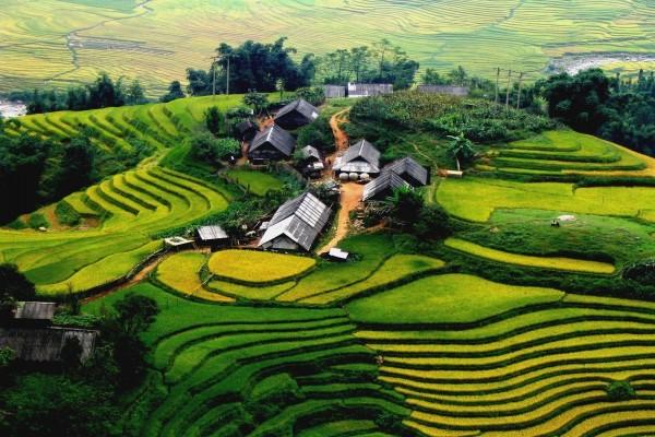 Casas en una plantación verde