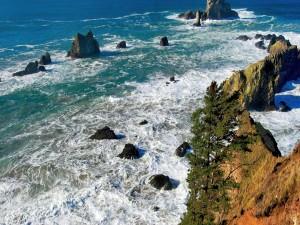Pinos en unas rocas junto al mar