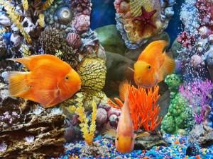 Acuario con peces dorados