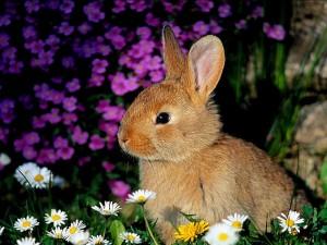 Un conejito entre flores