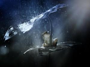 Rana sentada bajo una hoja escondiéndose de la lluvia