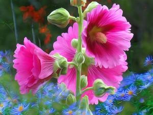 Flor rosa entre flores azules