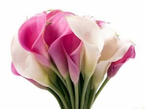 Ramo de calas rosadas y blancas