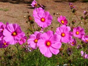 Espléndidas flores color fucsia
