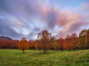 Árboles con hojas de otoño en un campo verde