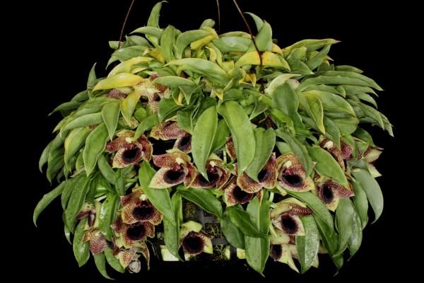 Espectaculares orquídeas entre hojas verdes