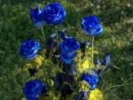 Ramo de rosas azules y flores amarillas