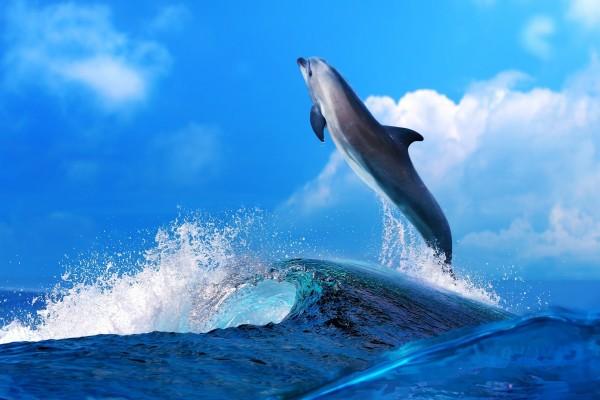 Delfín saltando fuera del agua