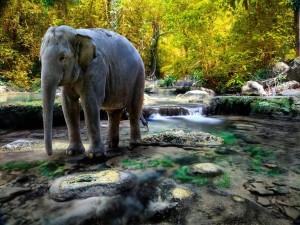 Elefante sobre el riachuelo de un bosque