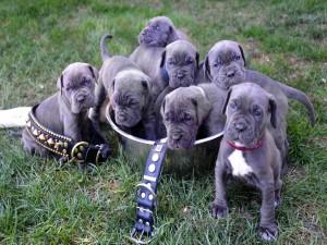 Cachorros sentados en una cuenca de metal sobre la hierba
