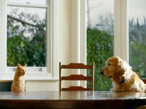 Gato y perro sentados a la mesa