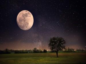 Árboles bajo la luna llena y un cielo estrellado