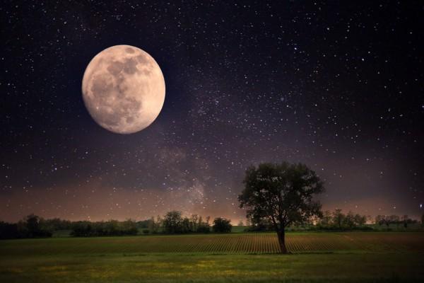 Árboles bajo la luna llena y un cielo estrellado (61182)