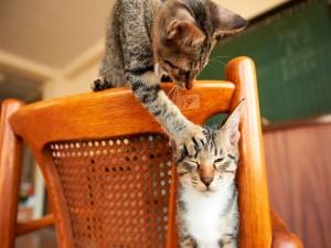 Un gato travieso tocando la oreja de otro gato