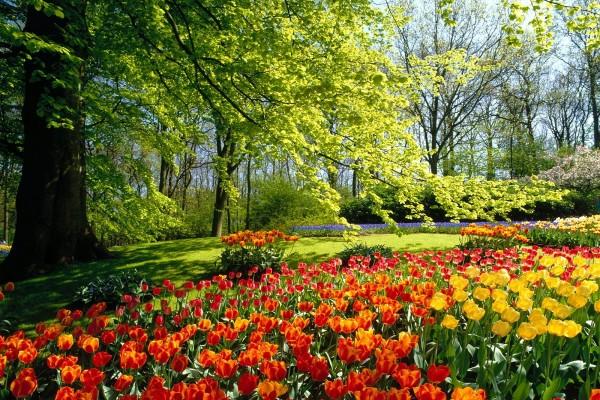 Hermosos tulipanes de colores entre los árboles