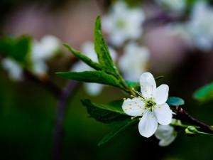 Flor blanca en una rama