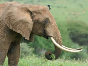 Pájaro posándose en la cabeza de un elefante