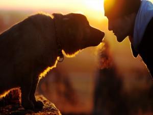 Un chico mirando a su perro