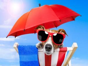 Perro con gafas para el sol sentado en una tumbona