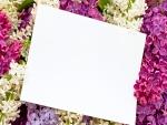Hoja en blanco sobre unas hermosas lilas