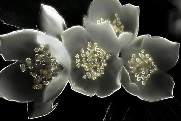 Flores en un fondo negro