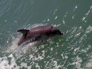 Delfín nadando en el mar